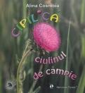 CIPILICA - CIULINUL DE CAMPIE